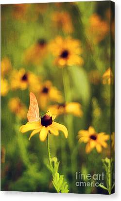 Flowers Of Summer Canvas Print by Darren Fisher