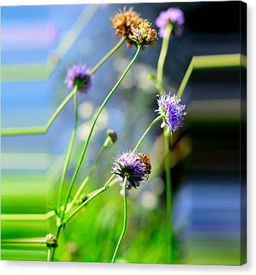 Flowers On Summer Meadow Canvas Print by Tommytechno Sweden