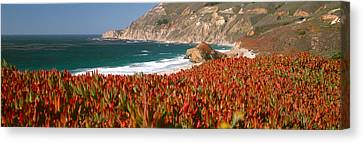 Flowers On The Coast, Big Sur Canvas Print by Panoramic Images