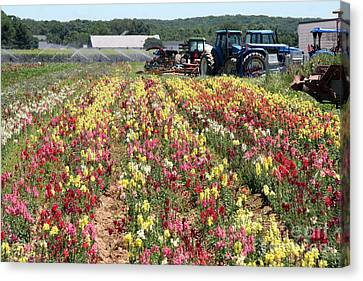 Canvas Print featuring the photograph Flowers On The Farm-2 by Steven Spak