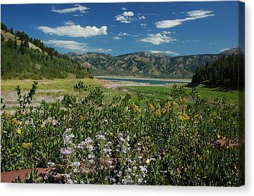 Flowers On The Palisades Resevoir Idaho Canvas Print by Larry Moloney