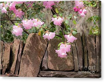 Canvas Print featuring the photograph Flowers On The Wall by Juergen Klust