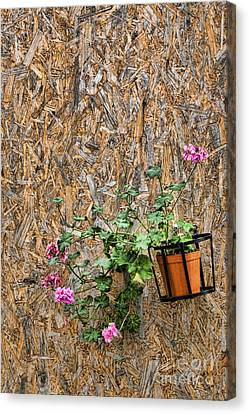 Flowers On Wall - Taromina Canvas Print by David Smith