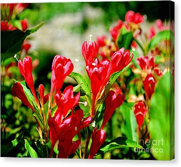Flowers -  Red Beauties - Luther Fine Art Canvas Print by Luther Fine Art