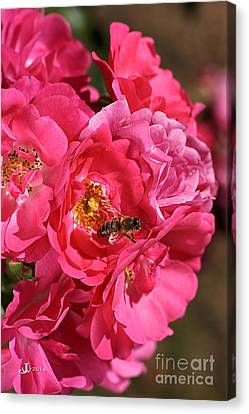 Flowers-roses-pink-bee Canvas Print by Joy Watson