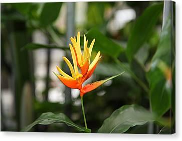 Flowers - Us Botanic Garden - 01133 Canvas Print by DC Photographer