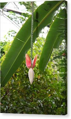 Flowers - Us Botanic Garden - 01136 Canvas Print by DC Photographer