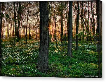 Flowery Sunset Canvas Print