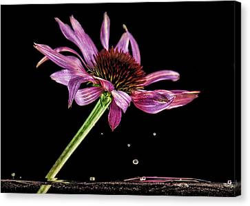 Flowing Flower 6 Canvas Print by John Crothers
