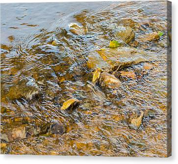 Murray Kentucky Canvas Print - Flowing Leaves by Neil Todd