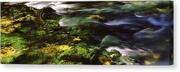 Ozark Canvas Print - Flowing Stream, Blue Spring, Ozark by Panoramic Images