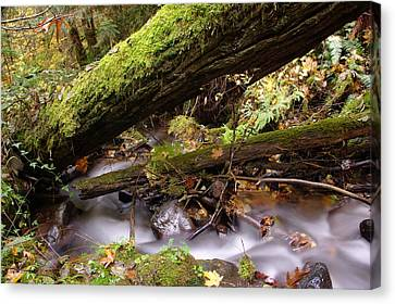 Flowing Under A Log Canvas Print by Jeff Swan