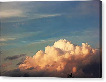 Fluffy Canvas Print by Danielle Keltner