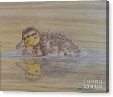 Fluffy Duckling Canvas Print by Elaine Jones