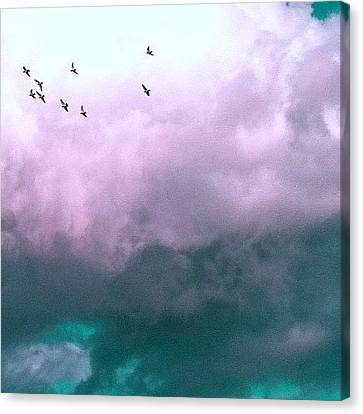 Fluffy Flight Canvas Print by Courtney Haile