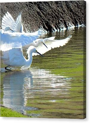 Canvas Print featuring the photograph Flurry by Deb Halloran