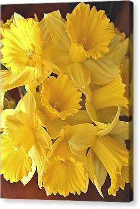 Canvas Print featuring the photograph Flurry Of Daffodils by Diane Alexander