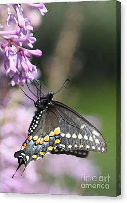Flutter Bye Canvas Print by French Toast