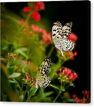 Flutter Flutter Canvas Print by Izzy Standbridge