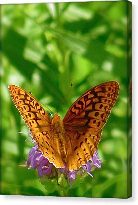 Flutterby Canvas Print by Tim Good