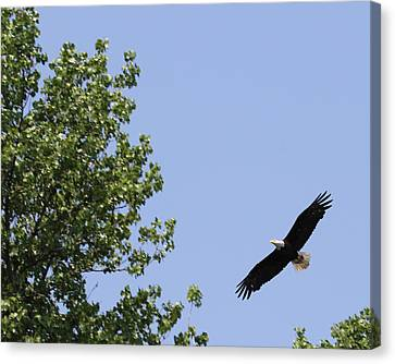 Fly Away Canvas Print by Bruce  Morrell