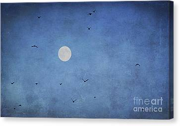 Fly Away Canvas Print by Darren Fisher