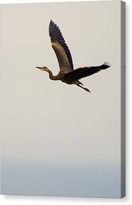 Canvas Print featuring the photograph Fly Away by Erin Kohlenberg