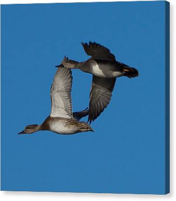 Fly By 1 Canvas Print by Ernie Echols