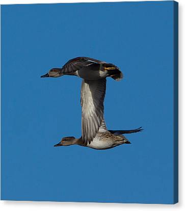 Fly By 2 Canvas Print by Ernie Echols