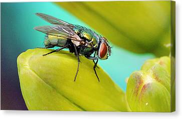 Canvas Print featuring the photograph Fly By by Cathy Donohoue