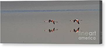 Fly Fly Away My Pretty Flamingo Canvas Print by Heiko Koehrer-Wagner