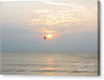 Fly Free Canvas Print by Kay Pickens