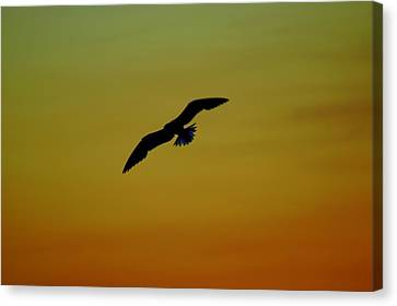 Fly High Free Bird Canvas Print by Frozen in Time Fine Art Photography