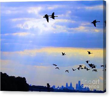 Fly Like The Wind Canvas Print by Robyn King
