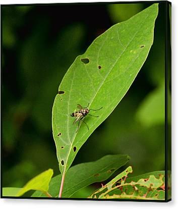 Fly On Leaf Canvas Print