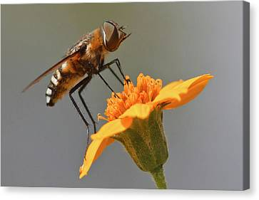 Fly Resting On Wildflower, Edinburg Canvas Print by Larry Ditto