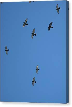 Fly Through The Sky's Ceiling Canvas Print