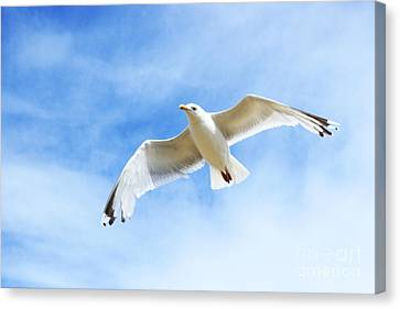 Fly With Me... Canvas Print