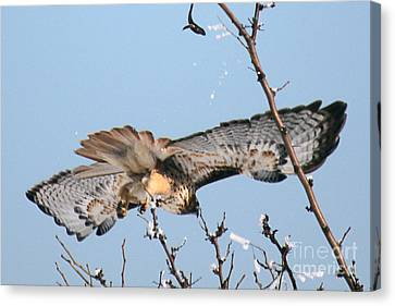 Flyby Canvas Print by Bob Hislop