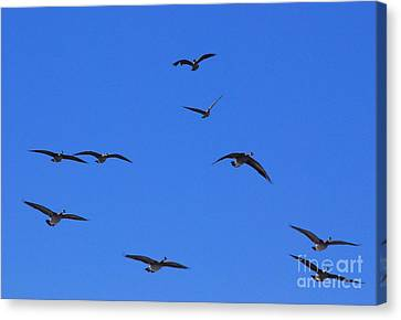 Flyin Geese Canvas Print by Mark McReynolds