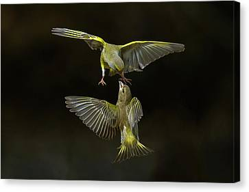 Pairs Canvas Print - Flying Attack! by Marco Redaelli