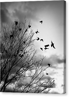Flying Birds Canvas Print by Elena Elisseeva