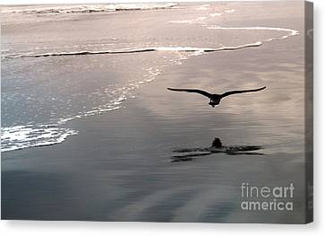 Flying Close To The Ground Canvas Print by Gregory Dyer