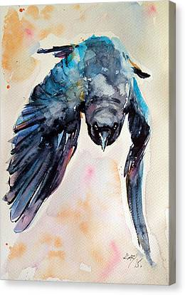 Flying Crow Canvas Print