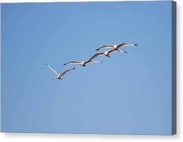 Canvas Print featuring the photograph Flying Formation by John M Bailey