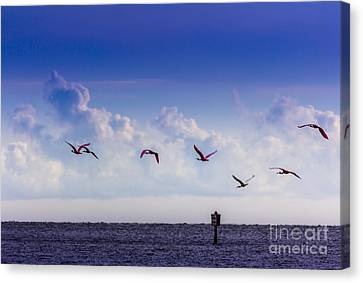 Sea Birds Canvas Print - Flying Free by Marvin Spates