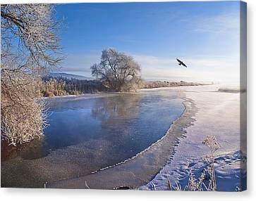 Flying Free On A Winter's Day Canvas Print