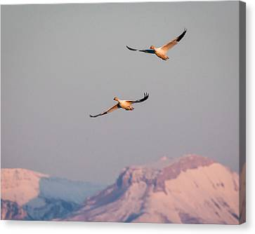 Canvas Print featuring the photograph Flying High by Jack Bell