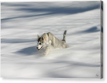 Flying In A Husky Dream Canvas Print