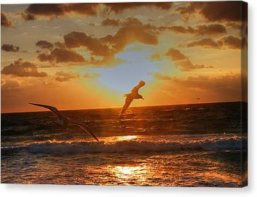 Canvas Print featuring the photograph Flying In The Sun by Dennis Baswell